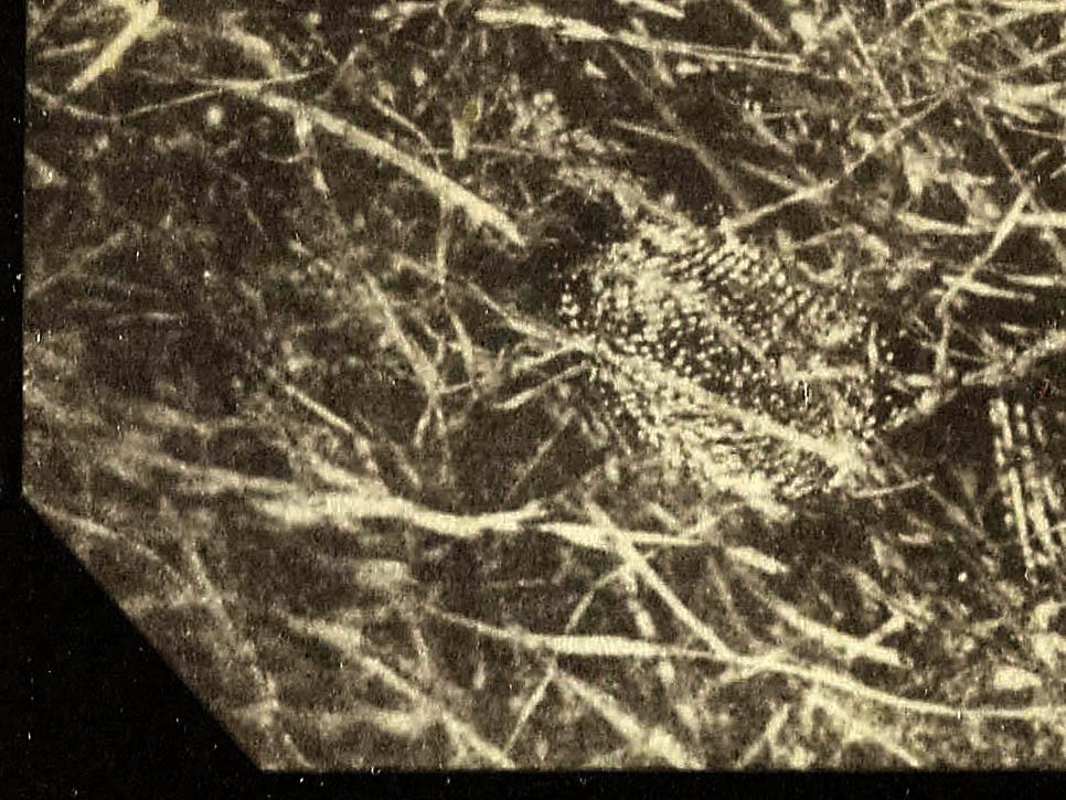 SC933_1937-2052_detail